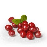 brusnica-plod